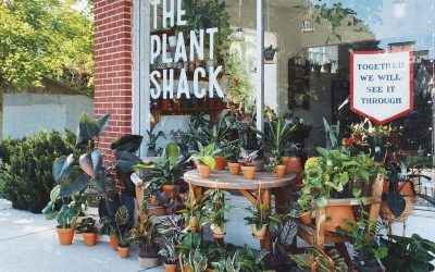 8 Business Tips from Rachel Stepien Of The Plant Shack
